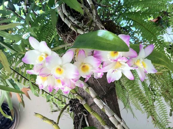 Riego de las orquideas