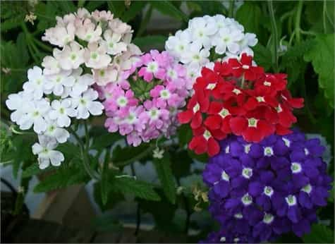 planta sin florecer
