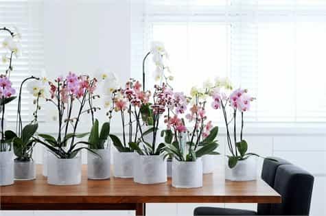 plantas oficina escritorio