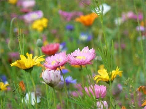semillas plantas flores1