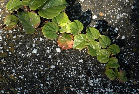 Riego en las plantas trepadoras