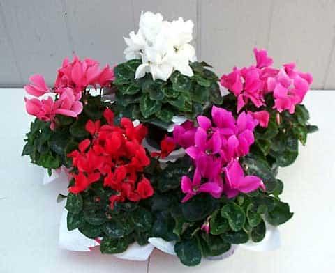 flores interior