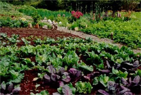 huerto organico