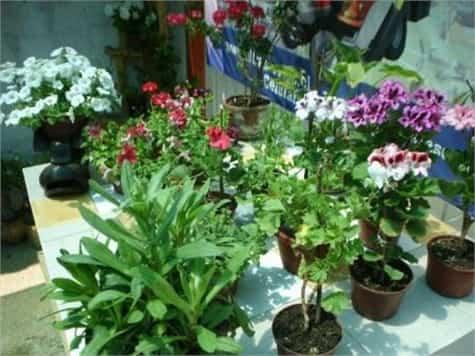 Plantas adornos