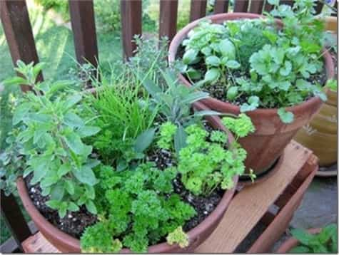 hierbas jardin