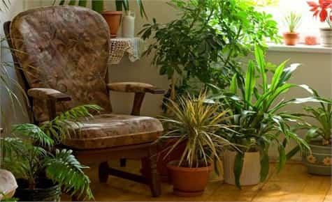 plantas de interior1