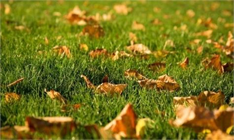 Cuidados césped otoño