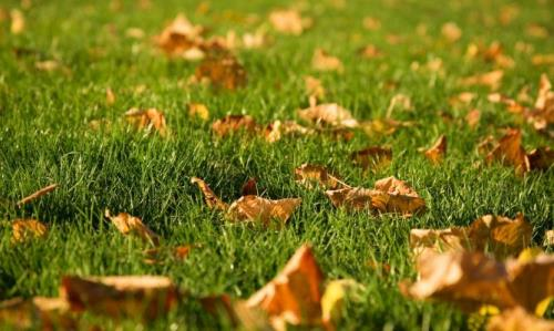 Cesped otoño