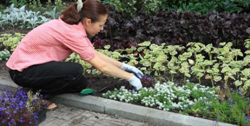 Cuidados jardín