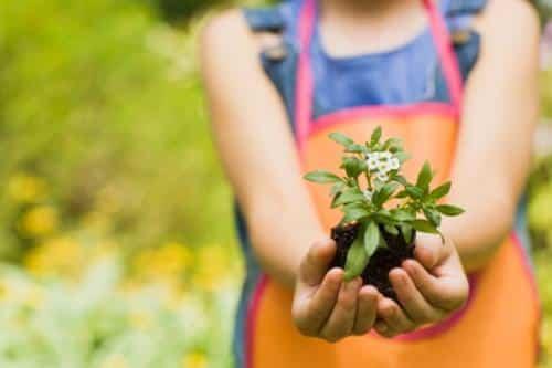 Jardineria salud
