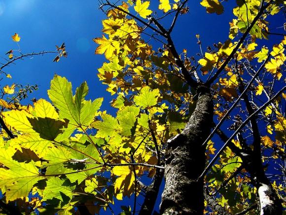 Imagen del otoño