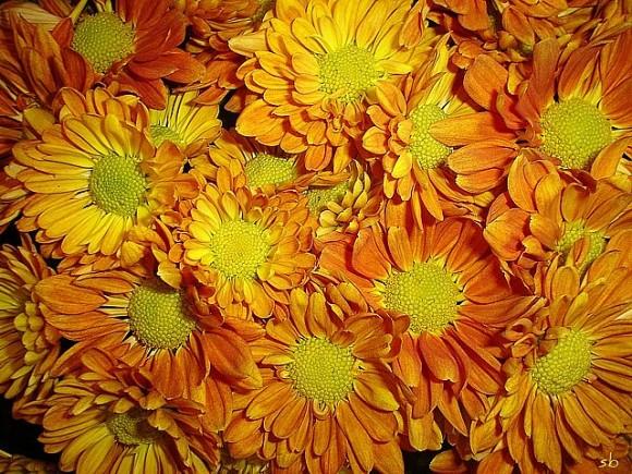 Flores para tu jardín en invierno