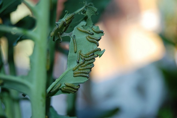 Plagas sufridas por las plantas vivaces