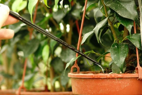 Poda de las plantas de interior
