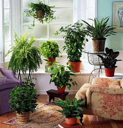 Cuidado de las plantas de interior en verano for Plantas en agua interior