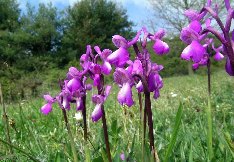 España especies plantas