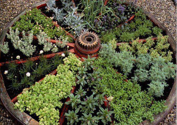 Huerto de hierbas aromáticas