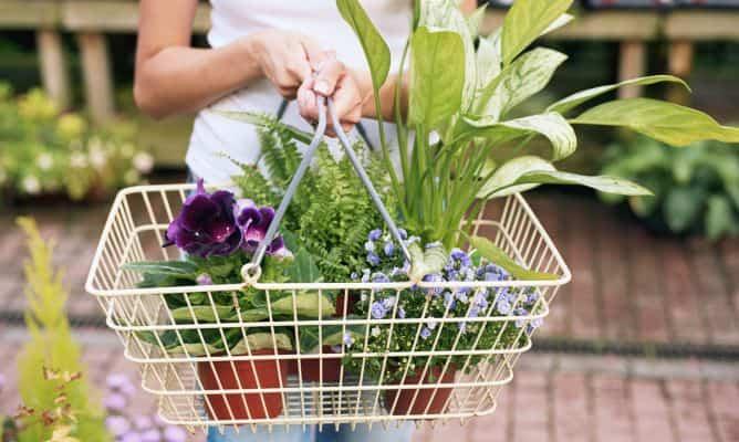Comprar plantas sanas