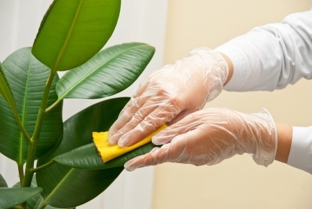 limpiar hojas