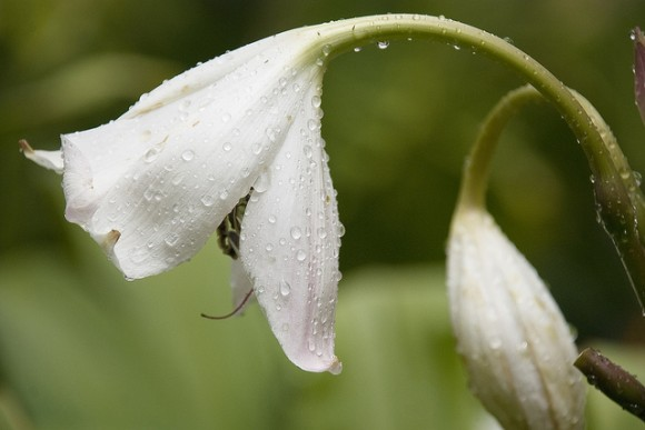 Protege a las plantas del calor