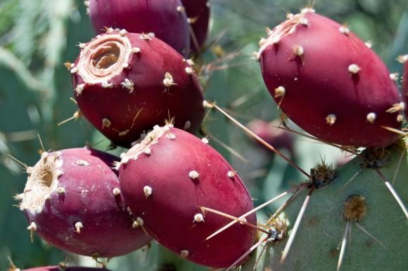 Regar los cactus
