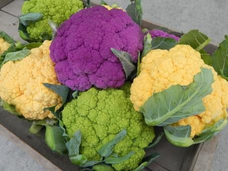 cultivar la coliflor
