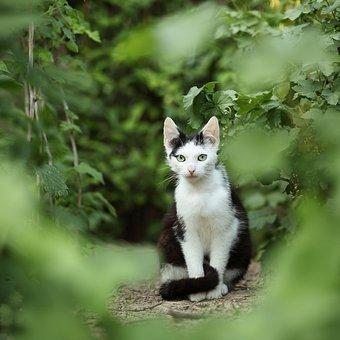 gatos-jardín