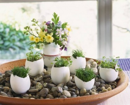 huevos convertidos en macetas