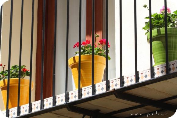 Plantas que pueden cultivarse en contenedores