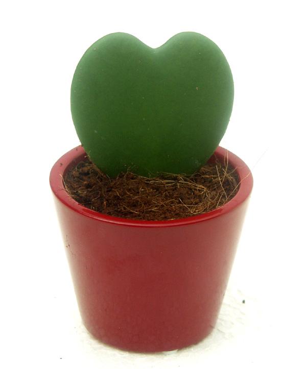 planta-del-corazón