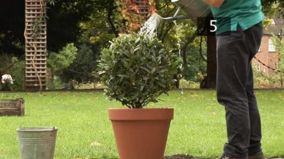plantar arbusto en una maceta