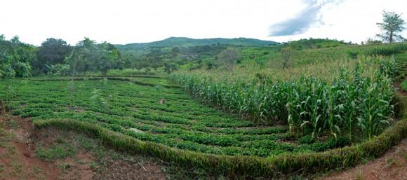 Todo sobre la agricultura ecológica