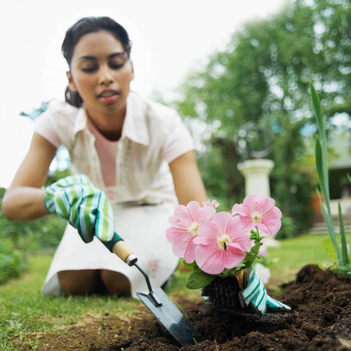 consejos para plantar