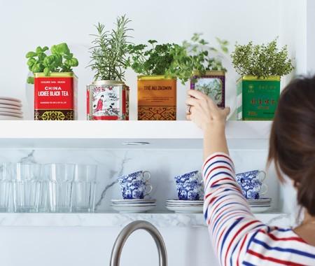 decorar con plantas aromaticas