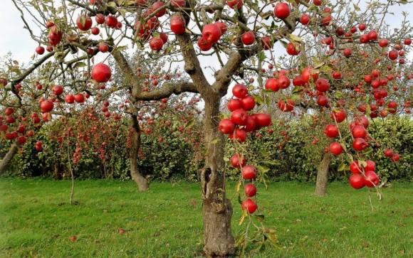 Consejos para el riego de frutales