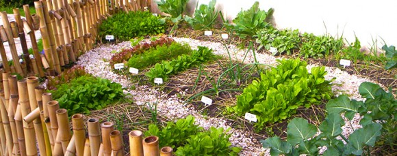 Rotación de los cultivos en tu huerta