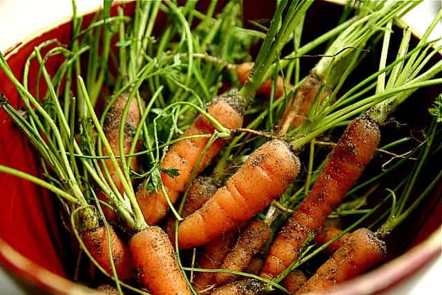 zanahoria-cultivo