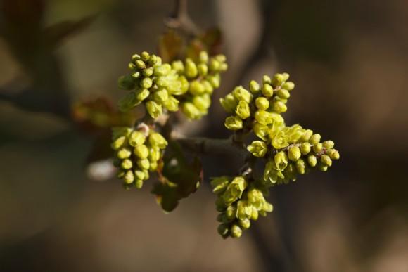 Cómo cultivar aromaticas