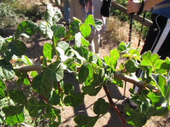 Pautas para el cultivo de aromáticas