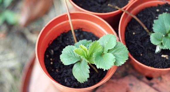 como aprovechar una planta