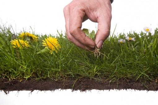 consejos para plantas