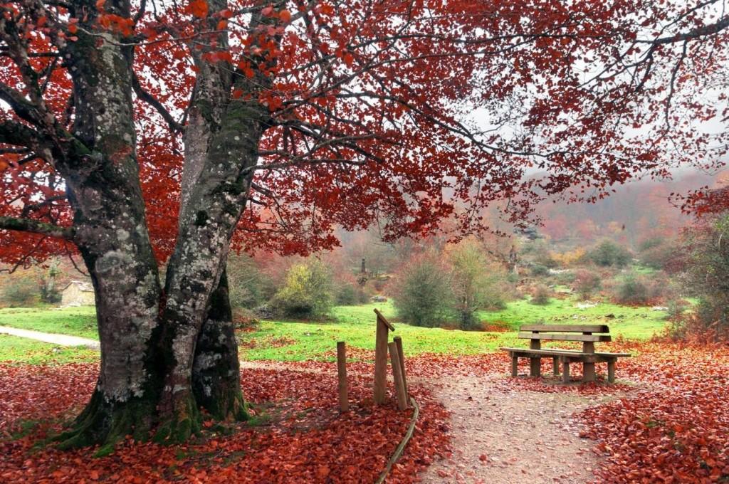 bench in park on autum