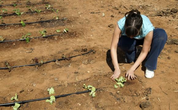 Formas para obtener exito en tus cultivos