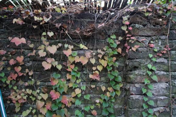 Plantas trepadoras que decoran tu jardín  blogs de Decoracion