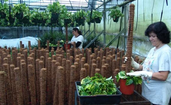 Cultivo de plantas para interior