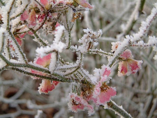 plantas-frío