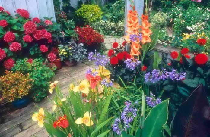 Decorar con plantas con flores1
