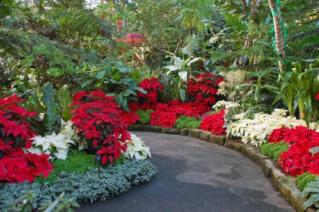 Christmas botanical garden