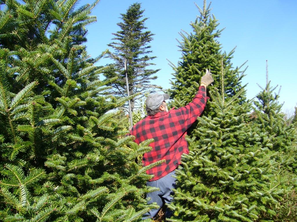 Comprar un árbol de Navidad natural