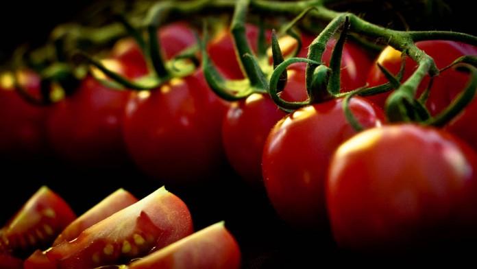 cultivar tomate cherry